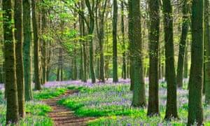 Dockey Wood, Hertfordshire