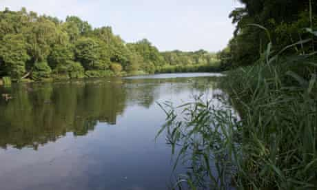 Cannop Ponds, Forest of Dean