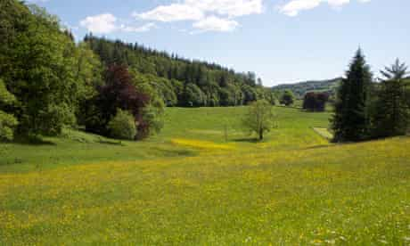 Grizedale Forest, Cumbria