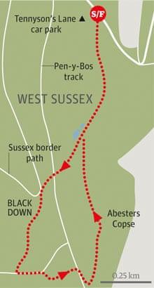 Black Down, West Sussex walk graphic