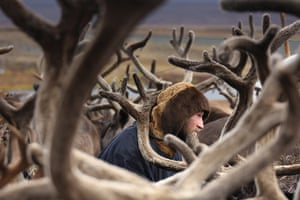 Travel Photo of Year: Yamal, Russia - antlers