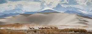 Travel Photo of Year: Tibetan wild donkeys