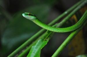 Travel Photo of Year: Manuel Antonio National Park, Costa Rica