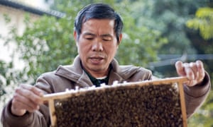 Wing Wo Bee Farm