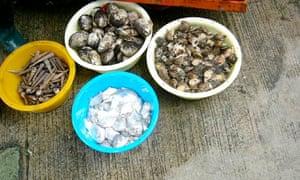 Shellfish on Lantau Island