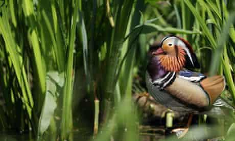 The London Wetland Centre
