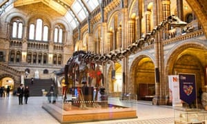 A dinosaur exhibit, Natural History Museum, London