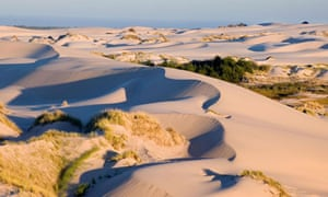 Dunes by the Siuslaw Forest