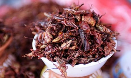 Grasshoppers fried in chilis, Mexico