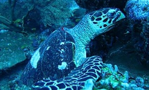 Turtle on the Master Divers trip in Thailand