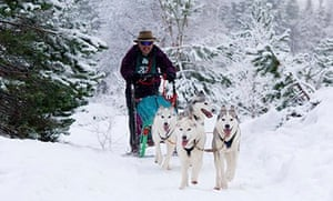 Sled dogs in  Aviemore.