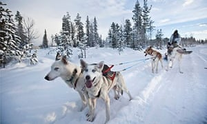 Huskies pulling sled along snow in Lapland