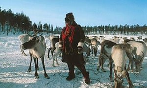 Reindeer at Lake Inari, Finland