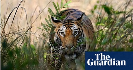 7586b3592d A guide to India s tiger reserves