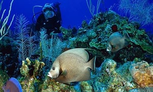 A colourful coral reef in the Cayman Islands