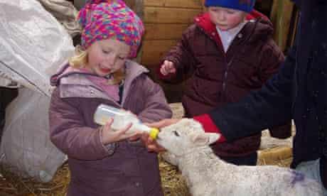 Lambing at Easter at Nannerth Farm, Wales
