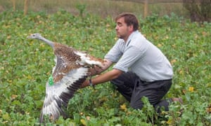 David Waters of the Great Bustard project