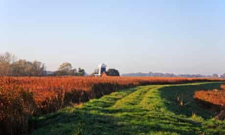 Wherryman's Way long-distance path near Reedham
