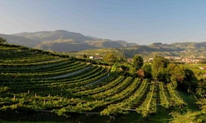 Italy's Valpolicella wine route: top 10 guide | Travel | The Guardian