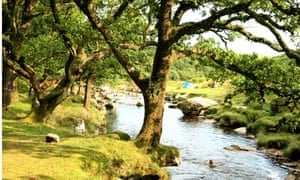 Piles Copse, Dartmoor