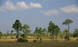 Hike through the Big Cypress National Preserve