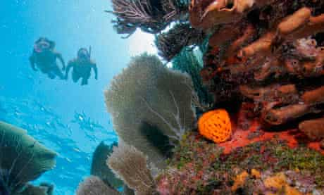 Diving for coral