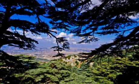 Chouf mountains viewed from a cedar tree