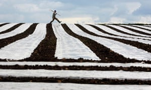 Farmer David Wallace checks on his crop of maize in Crumlin, County Antrim, in Northern Ireland