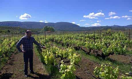 Juan Cascant, co-owner of Celler la Muntanya, inspects his vines