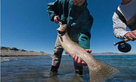 Lahontan cutthroat trout, Lake Lahontan