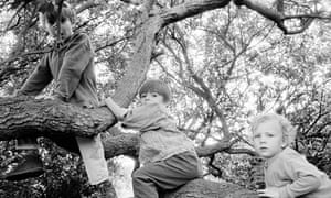 Children playing in a tree