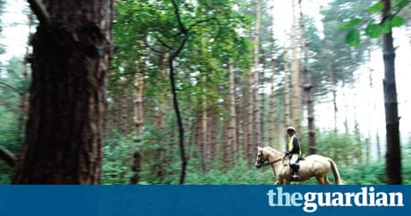 England S Forests Riding In The Woods On A Pony Called