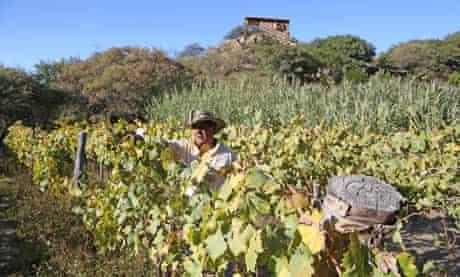 Enrique among his vines at El Divisadero