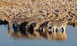 Zebras at a waterhole, Namibia