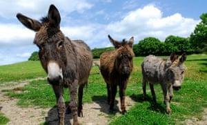Nettlecombe Farm, Isle of Wight