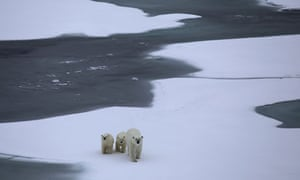 Polar bear and cubs, spotted across the Northwest Passage.