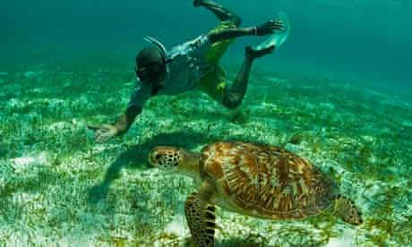 BA Islands: snorkelling with green turtle