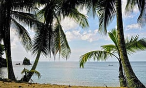 Coconut palm trees on Englishman's Bay.
