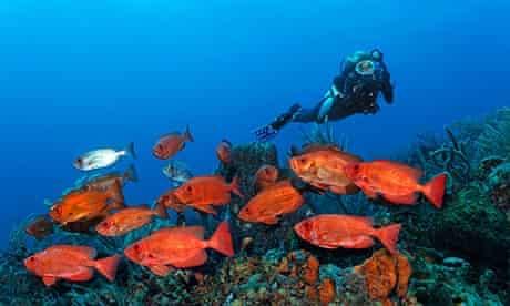 Scub diver, Tobago