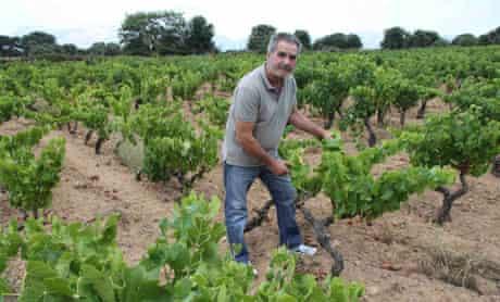 Sedilesu vineyard, Sardinia