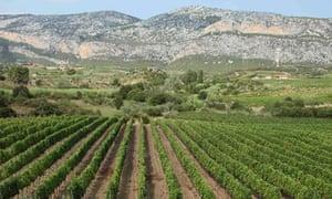 Atha ruja vineyard, Sardinia