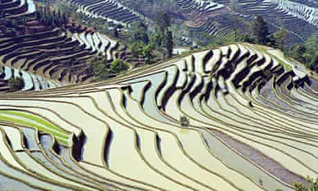 Yunnan rice terraces, China
