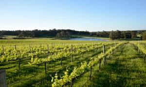 McHenry Hohnen vinyards