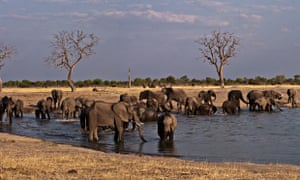 Elephants gather at a waterhole in Hwange national park, Zimbabwe