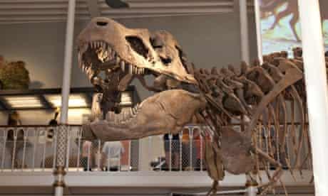 Dinosaur skeleton display at the National Museum of Scotland, Chambers Street, Edinburgh