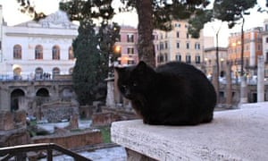 A cat at the Torre Argentina