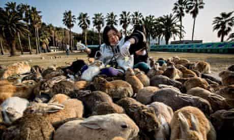 Two tourists sit and feed hundreds of rabbits at Okunoshima Island