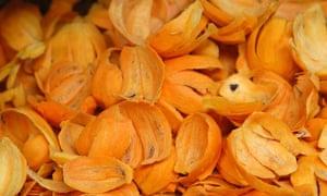 Tucuma, Amazon fruit.