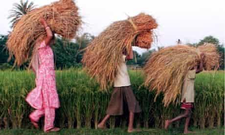 An Indian farming family