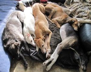 Top pets: sleeping dogs